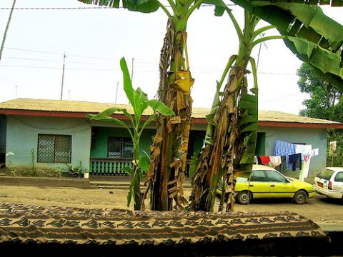 camerun-naturaleza.jpg