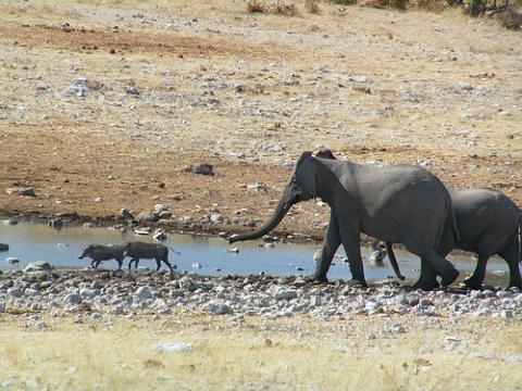 elefantes-africa.jpg