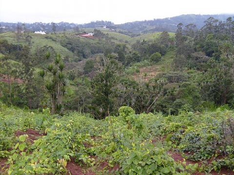 arboles-camerun.jpg