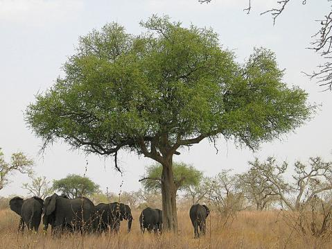 elefantes-camerun.jpg