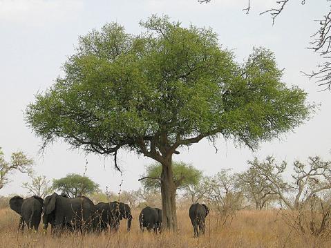 camerun-elefante.jpg