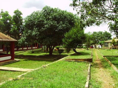 naturaleza-camerun.JPG